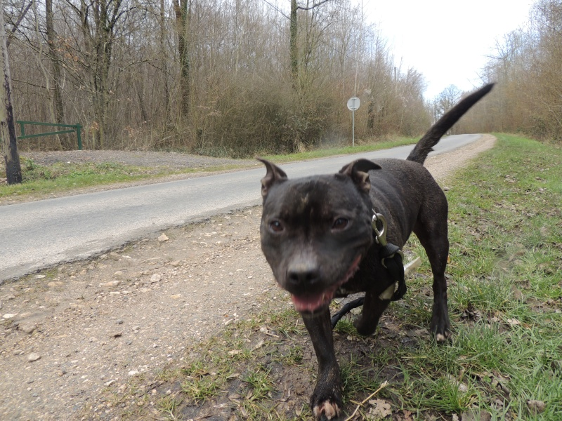 Fidji -Staffie Mercre62