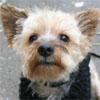 Papotage sur les chiens qui bénéficient de l'Opération Doyen - Page 4 Whisky10