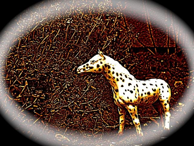 Mini-Horses =P Hpim2412