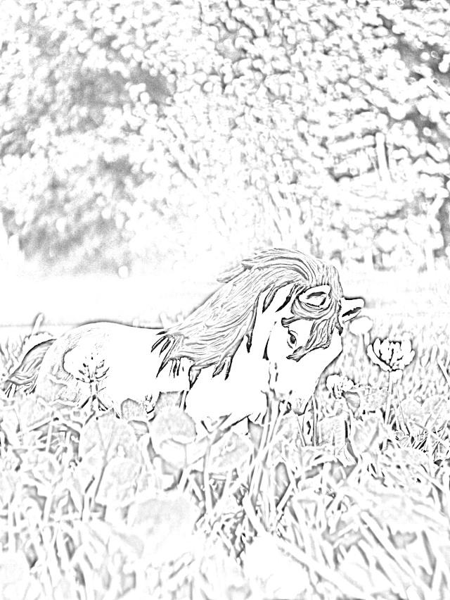 Mini-Horses =P Hpim2413