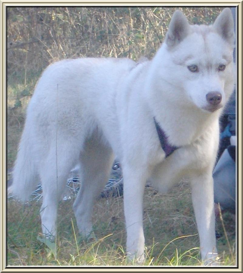 Nos loups grandissent, postez nous vos photos Caya11