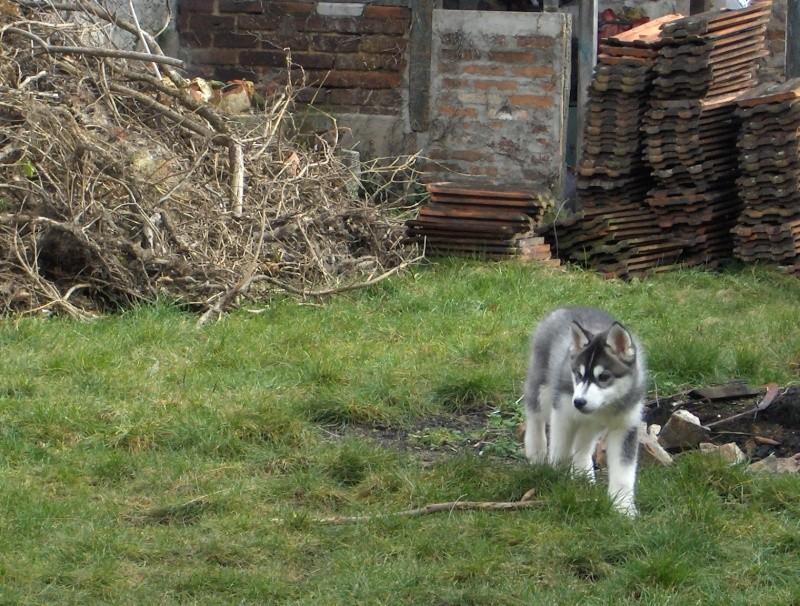 Nos loups grandissent, postez nous vos photos Hpim2311