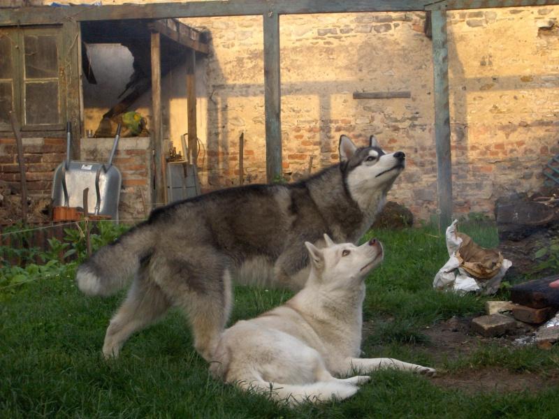 Nos loups grandissent, postez nous vos photos Hpim3110