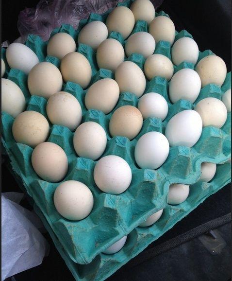 بيض دجاج بلدي للبيع حراج Captur10