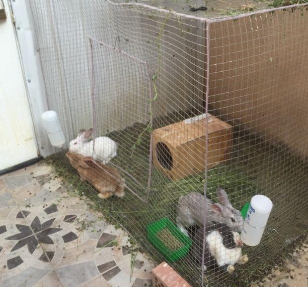 ارانب للبيع بالرياض حراج Qq10