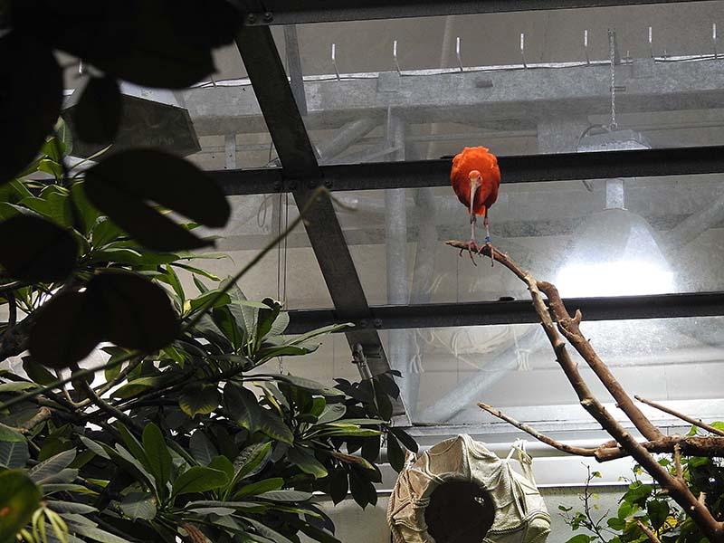 Petit tour au Biodôme 00116