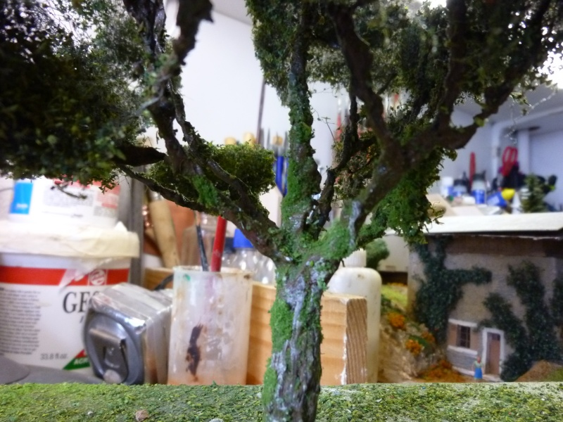 les arbres P1090355