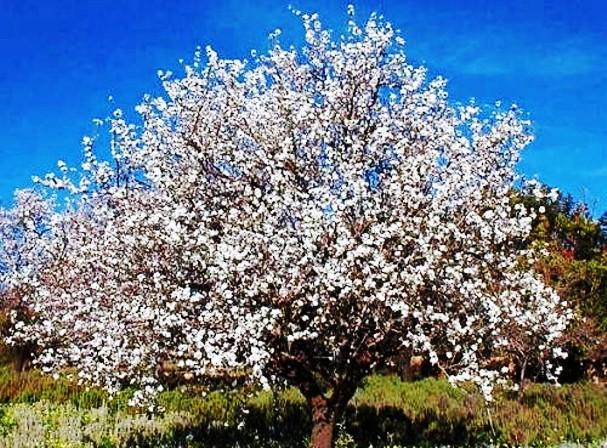 Tou Bichvat (Nouvel an des arbres) Arbres10