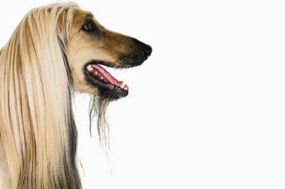 Le chien de Nicolas Sarkozy nommé à la tête de la S.P.A Levrie10