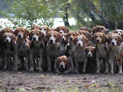 Le chien de Nicolas Sarkozy nommé à la tête de la S.P.A Meute10