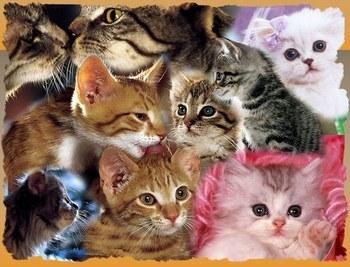 les chats 27063810