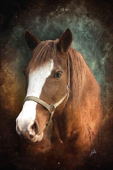 les chevaux  - Page 3 Chevau10