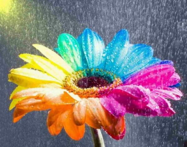 jeux de couleurs  - Page 5 Fleur-10