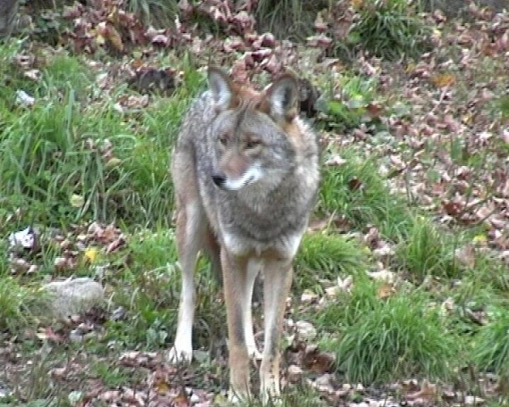 Les Loups - Page 3 Img-1110