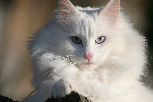 les chats Photo-10