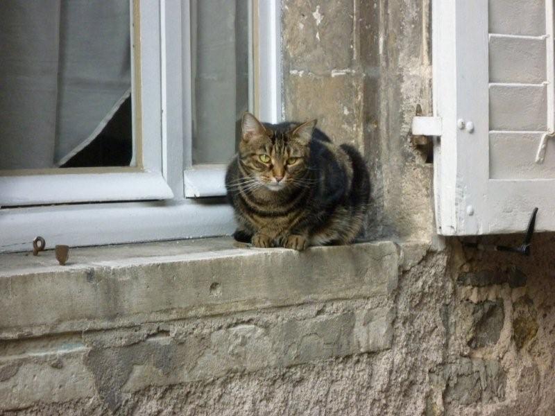 Le chat de gouttière Dimanc62
