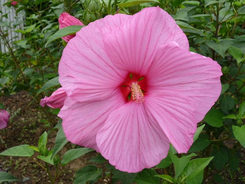 Fleurs géantes Fleurs38