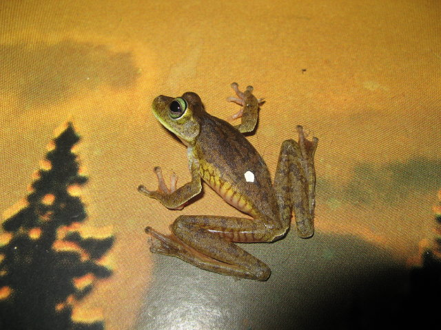 De ma Kia Lorette petite grenouille Img_2410