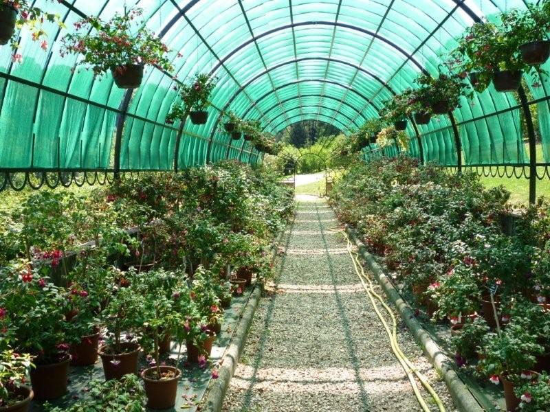 Fuchsia du Jardin Bota . Jardi176