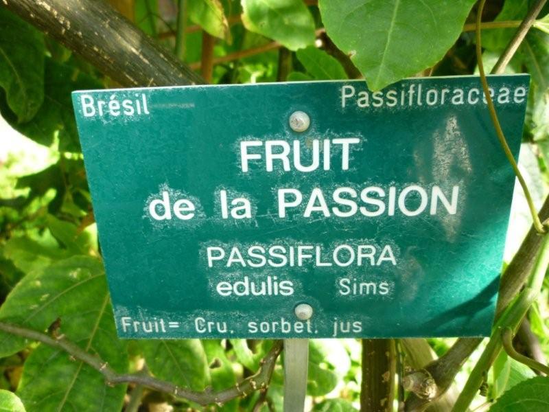 Fruit de la passion Jardi185