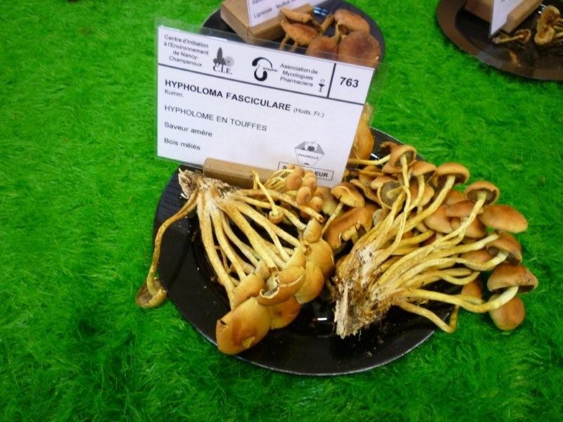 Exposition sur les champignons au Jardin Bota. Jardi202