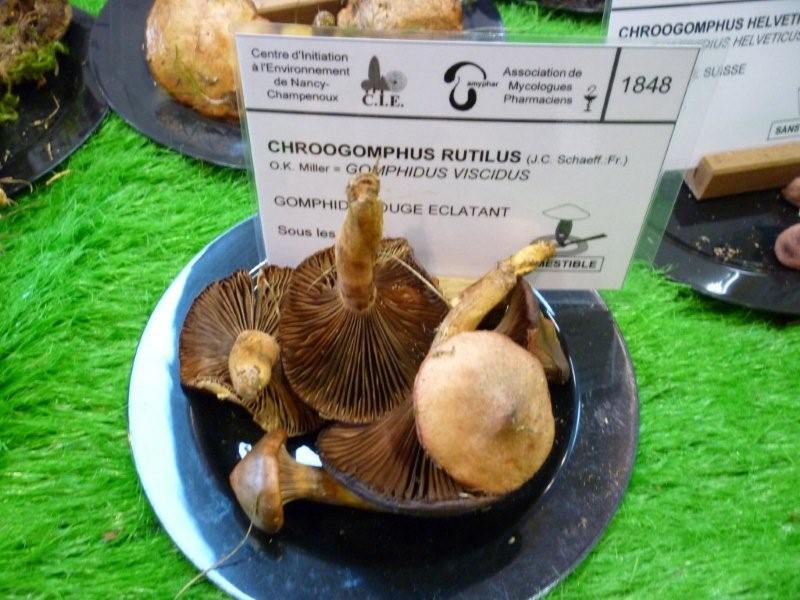 Exposition sur les champignons au Jardin Bota. Jardi208