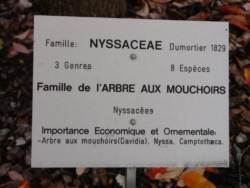 Famille de l'arbre aux mouchoirs Jardi230