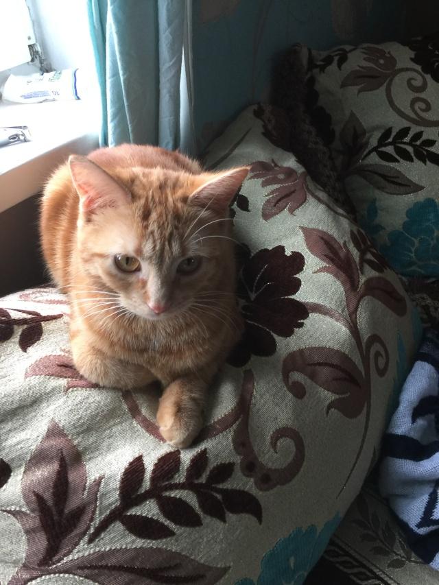 SOS pour 3 chats dont une jeune femelle gestante (59) Img_1510