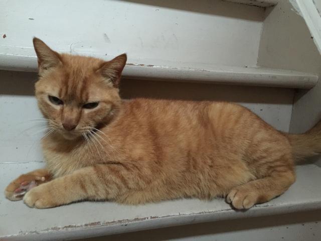 SOS pour 3 chats dont une jeune femelle gestante (59) Img_1511