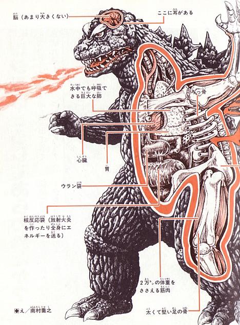 Anatomie du gibier ! Anatom12