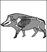 Anatomie du gibier ! Sangli17