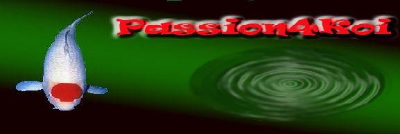 passion4koi