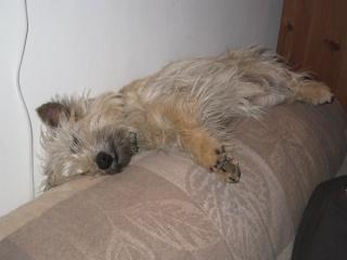 Mon endroit préféré pour dormir ...... Copie_16