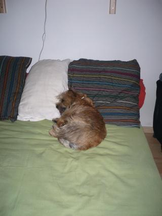 Mon endroit préféré pour dormir ...... P1020010