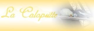 forum la calopsitte Lacalo11