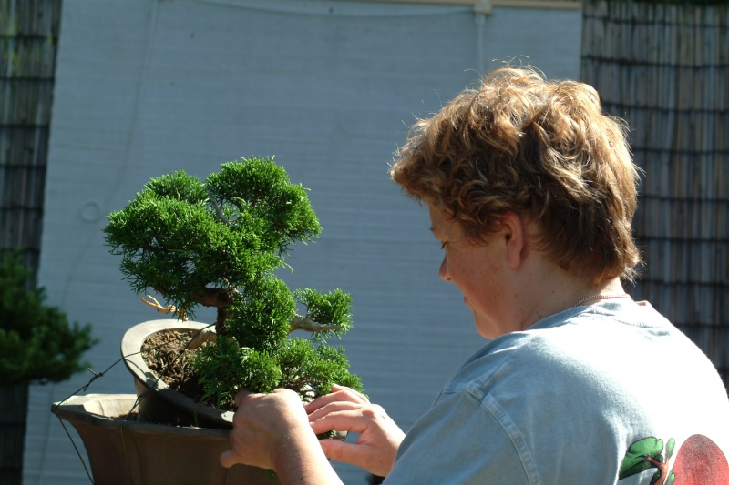 "The ""Corkscrew Juniper"" Challenge: 5_me_w10"