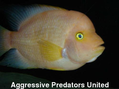 APU's Official November POTM Voting Thread (General Fish) 222_me10