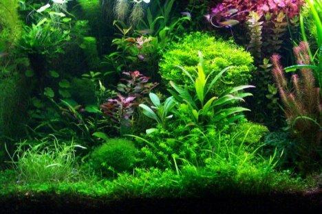 Aquarium Plant List Aquati10