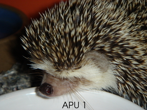 APU's Official March POTM Voting Thread (General Pets) Bond_g10