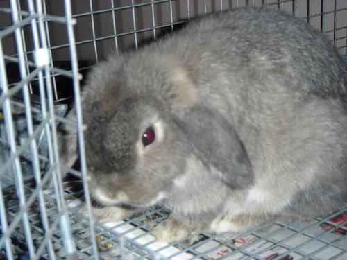 My Rabbits Family29