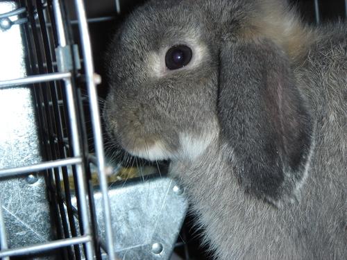 My Rabbits Family30