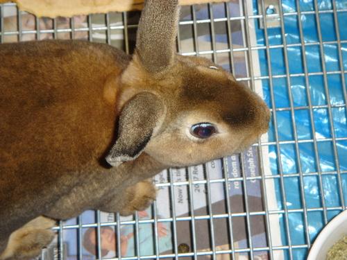 My Rabbits Family31
