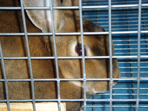 My Rabbits Family32