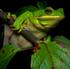Amphibians-Frogs,Toads,Salamanders,Newts