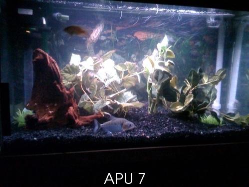 APU's Official March POTM Voting Thread (General Fish) Milkma10