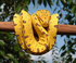 Reptiles-Snakes,Lizards,Tortoises