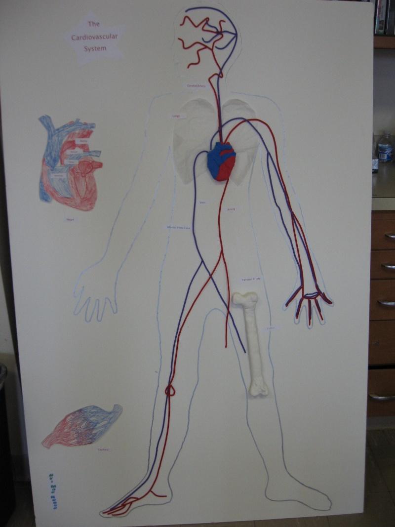 Grade 5 A- The Heart Model Img_0010