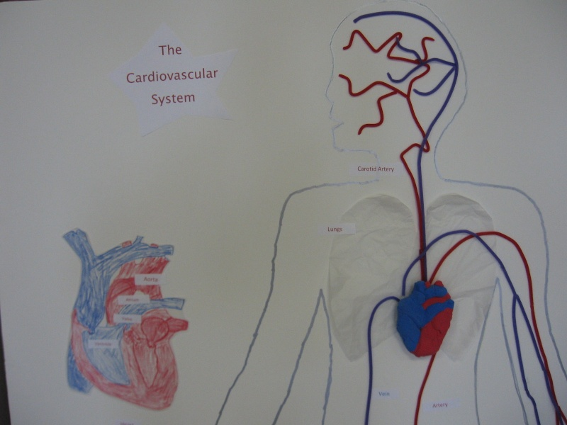 Grade 5 A- The Heart Model Img_0011