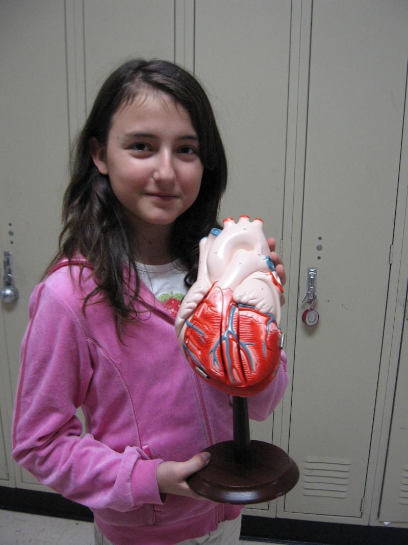 Grade 5 A- The Heart Model Img_1414