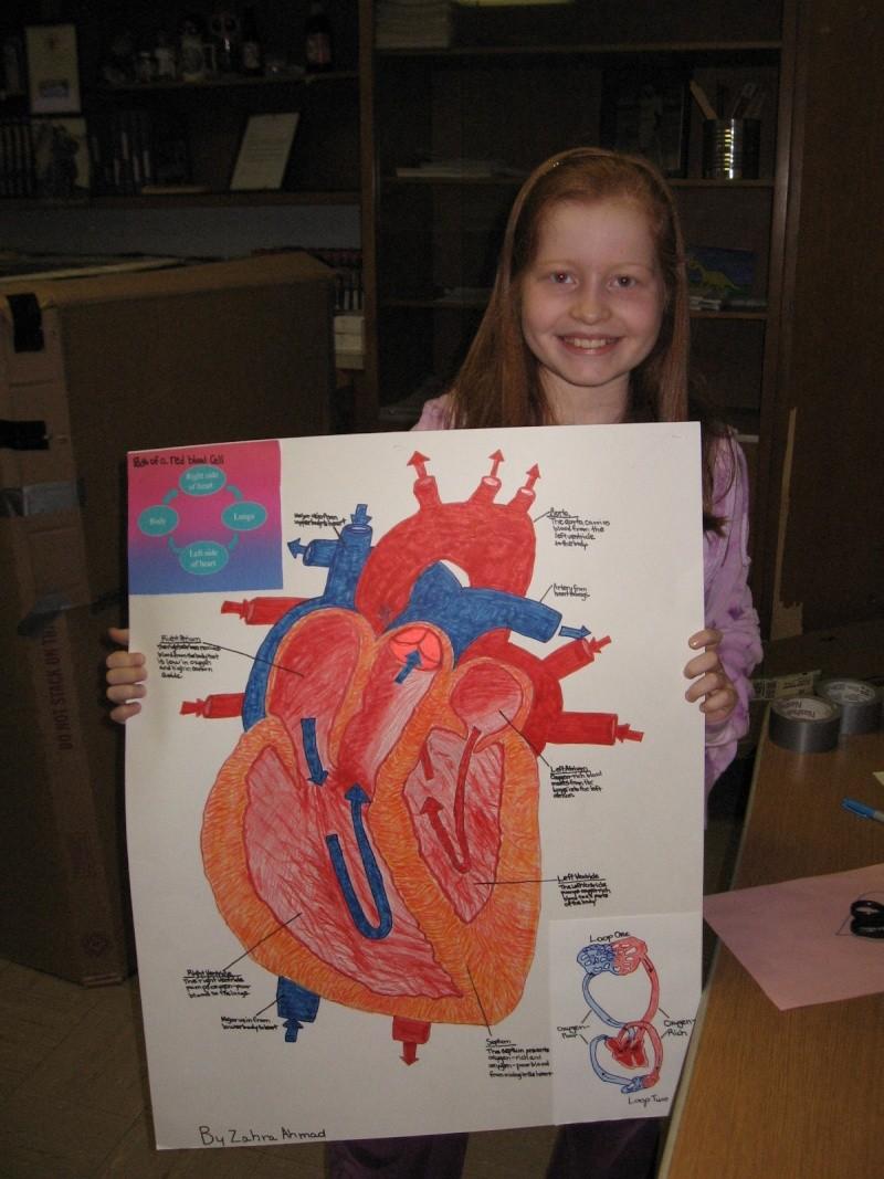 Grade 5 A- The Heart Model Img_1415